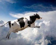 Vaca-volando